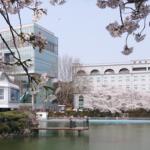 봄_벚꽃2